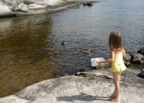 feeding-the-ducks